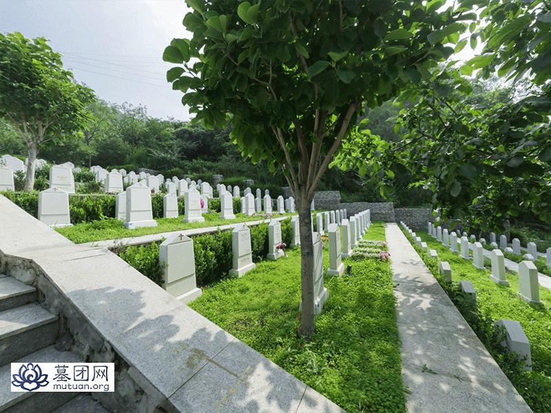 九公山长城纪念林 墓区景观