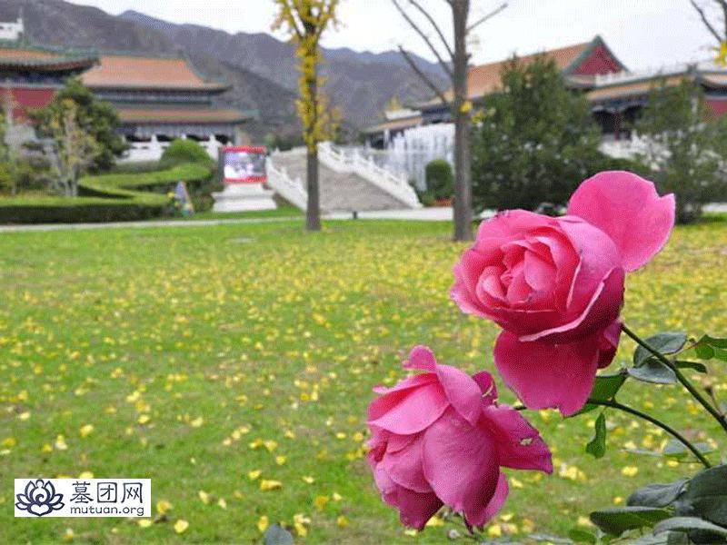 天寿陵园随拍